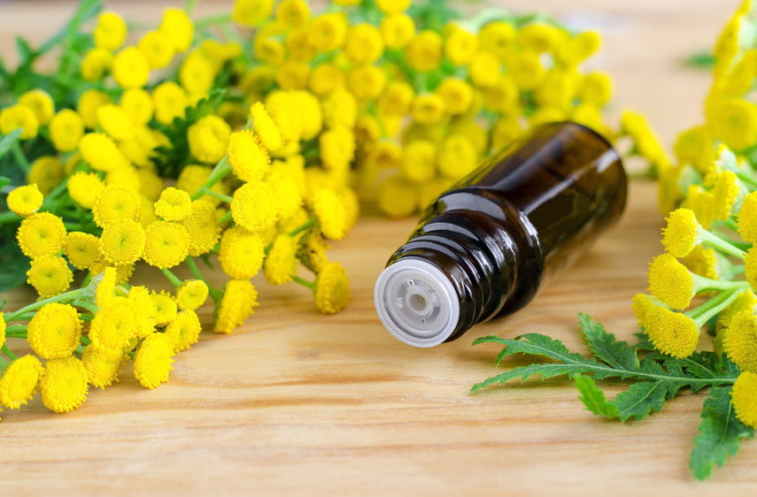Small bottle of essential tansy oil
